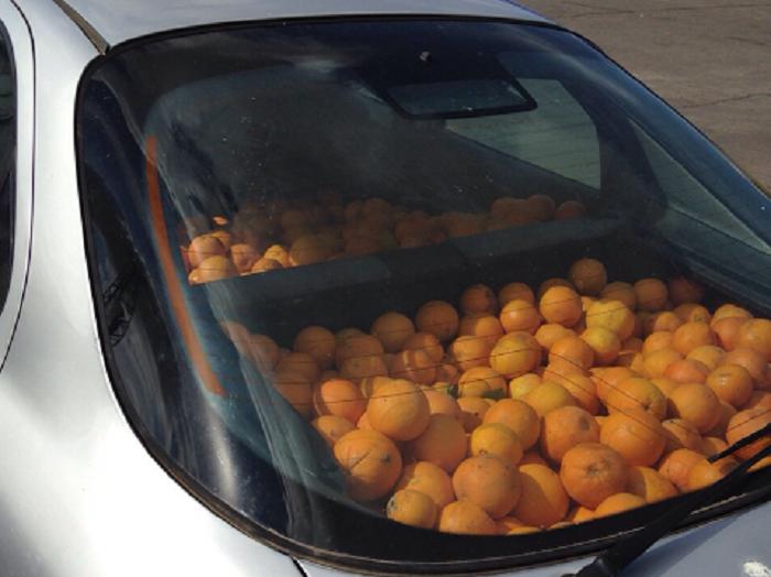 Las naranjas sustraídas en el interior del vehículo.