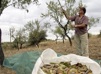 LA UNIÓ alerta del aumento de robos de la cosecha de almendras