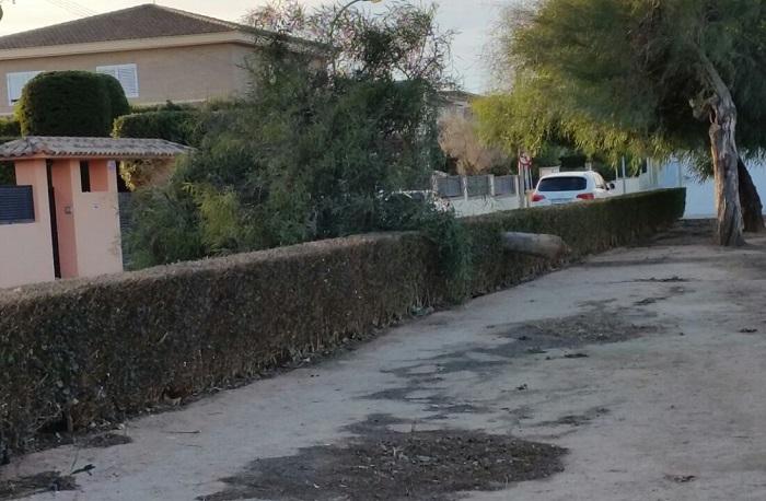 Uno de los árboles caídos en L'Eliana.