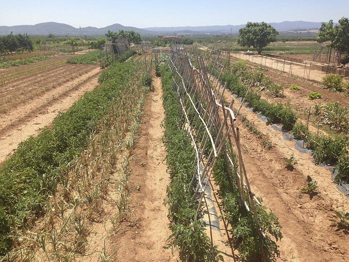 Los campos de cultivo deben estar en óptimas condiciones para poder optar a las ayudas municipales.