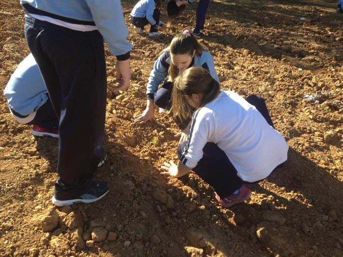 Alumnos del colegio San Rafael plantando hoy árboles en La Pobla.