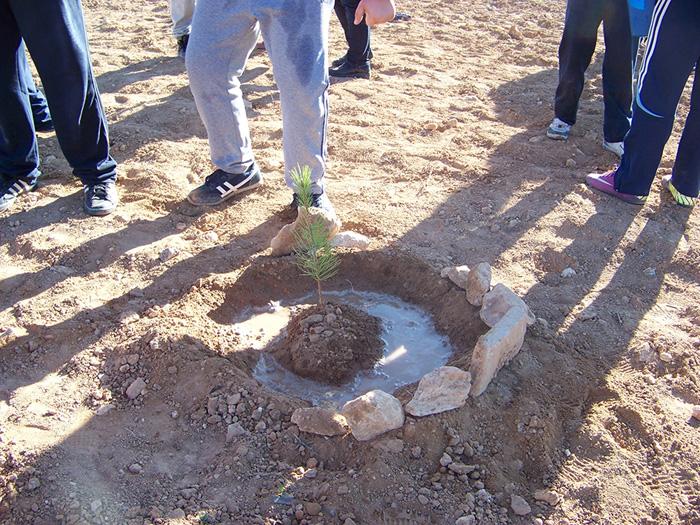 Es plantaran 800 exemplars durant els actes de celebració del Dia de l'arbre