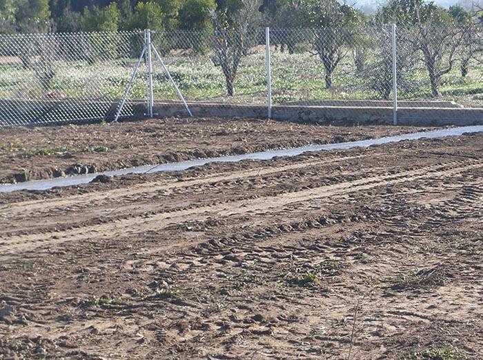 Los terrenos municipales han sido habilitados para el cultivo de frutas y hortalizas.