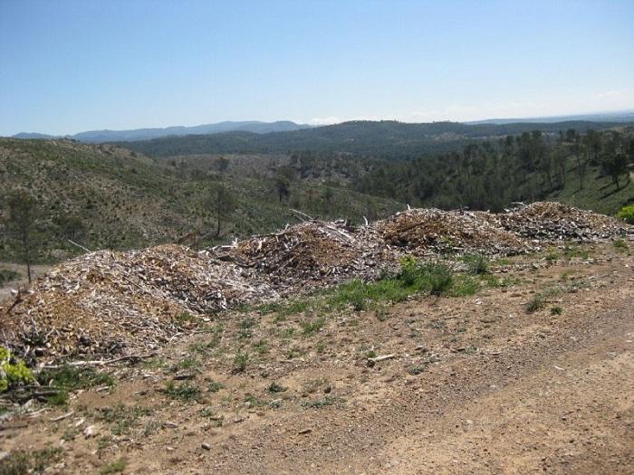 Montaña de restos de poda en el monte de la Concordia de Llíria.