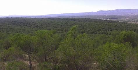 Boscos de Llíria