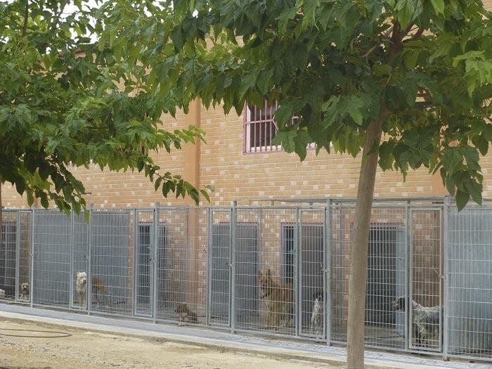 Los perros peligrosos han sido trasladados a la perrera Ribamontes.