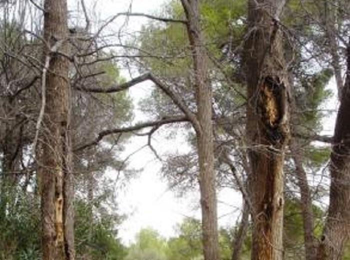 Ejemplares del Parque de San Vicente que están en riesgo de derrumbe.