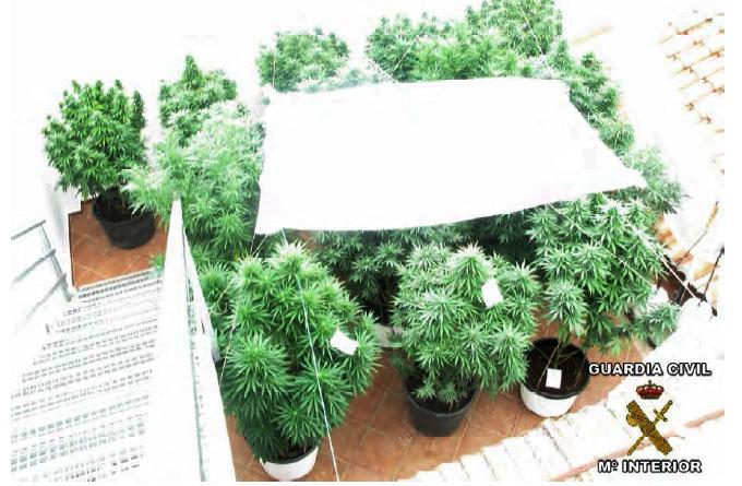 Vista aérea de la plantación de cannabis de Marines, en la comarca del Camp de Túria