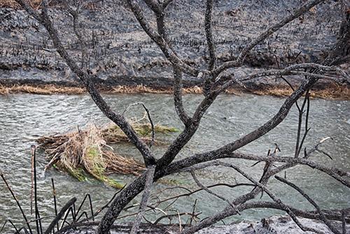 Visita a los efectos del incendio de la Vallesa, en el Parque Natural del Túria