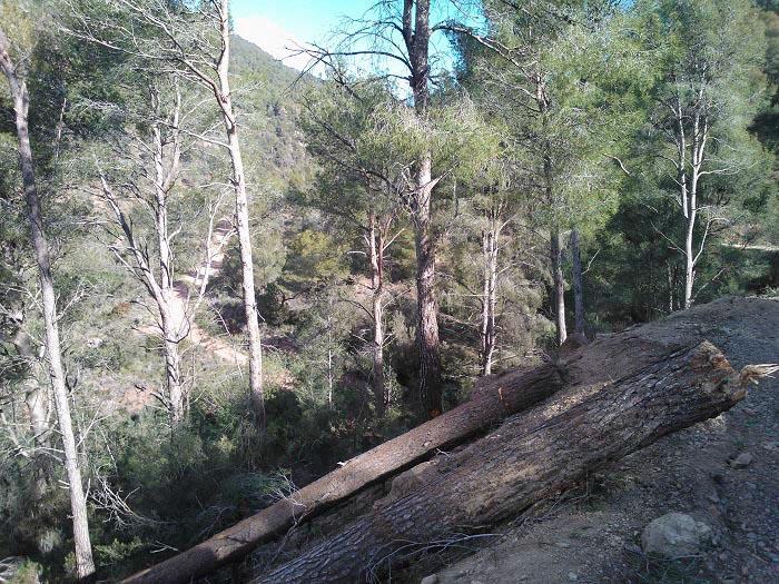 El consistorio de Serra está actuando en la Calderona para preparar el paraje para el verano.