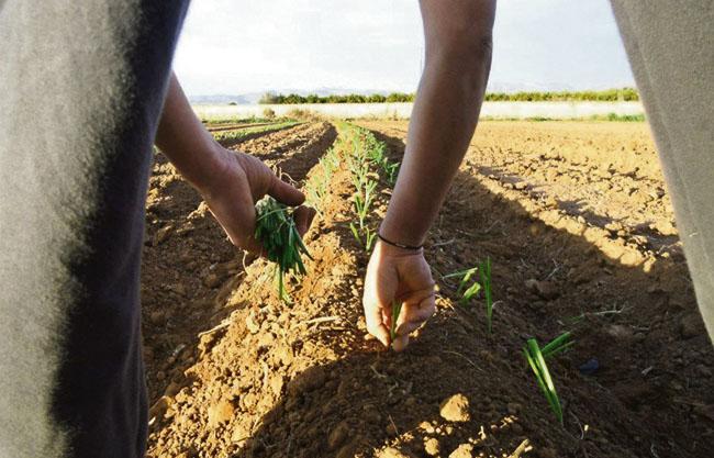 La Crisopa venta verdura i fruita ecològica al Camp de Túria i València
