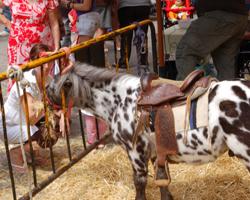 Camp de Túria Feria de Serra