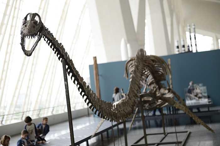 dinosaurios camp de turia