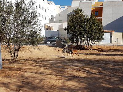 parque canino camp de turia