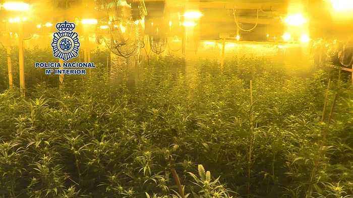 marihuana camp de turia