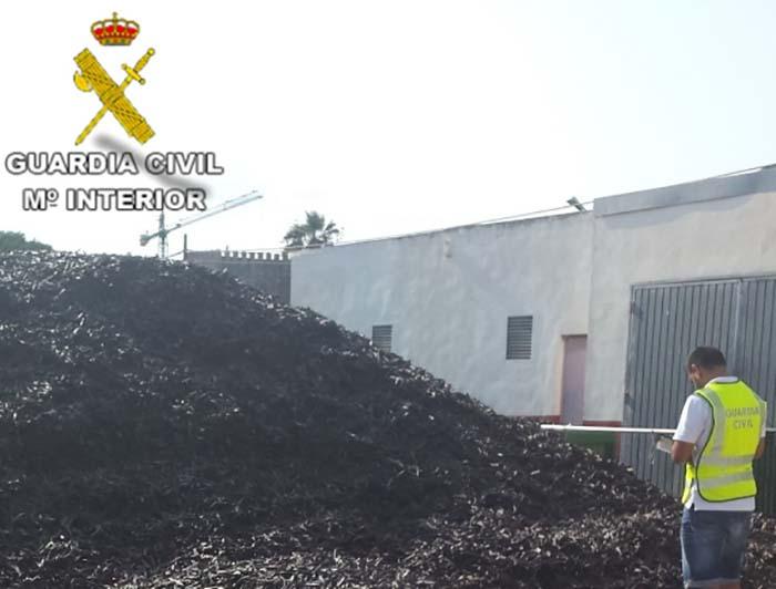 robo de algarrobas en Camp de Túria