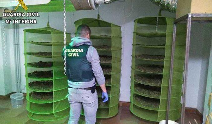 marihuana la pobla