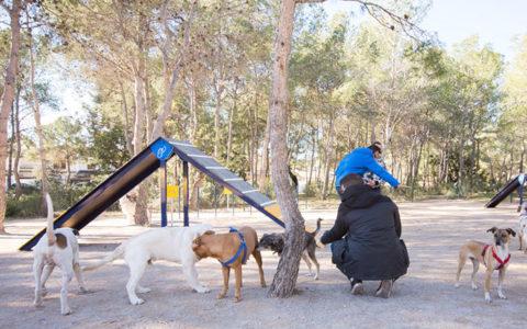 agility parc gossos